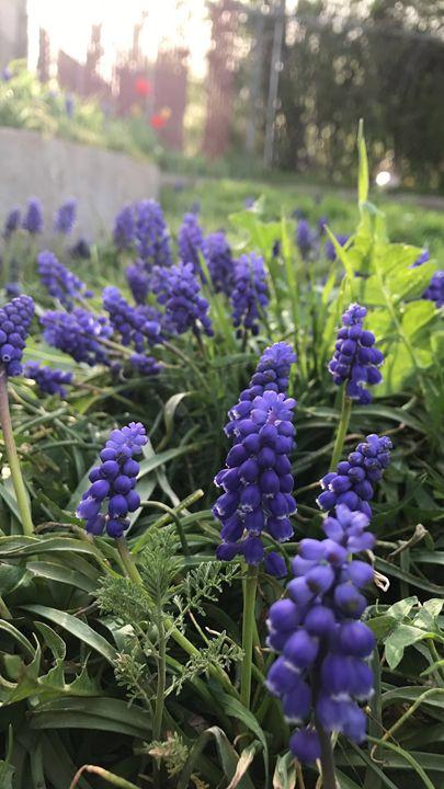Purple flowers - Michelle's Gallery