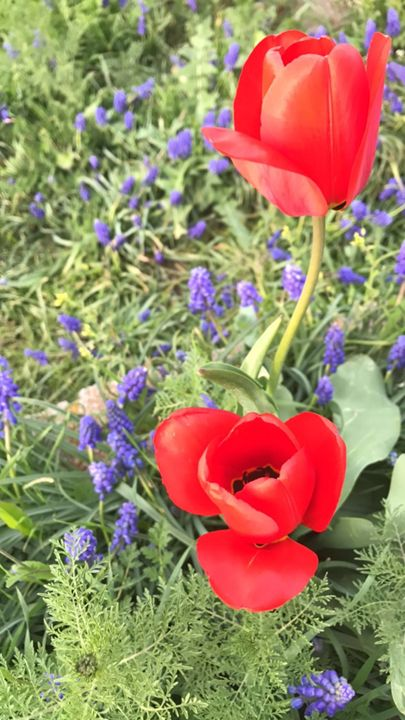 Red and purple flowers - Michelle's Gallery