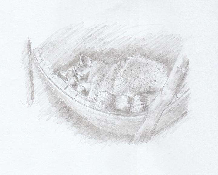 Sleeping Raccoon - Ernie Westfall