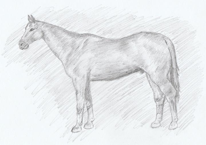 Horse Pencil Drawing - Ernie Westfall
