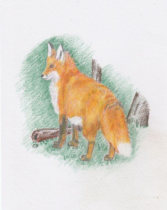 Red Fox - Ernie Westfall