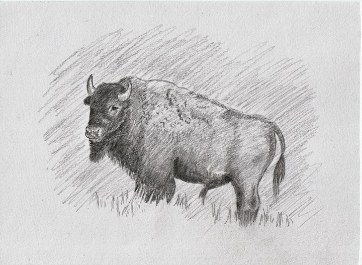 The Buffalo - Ernie Westfall