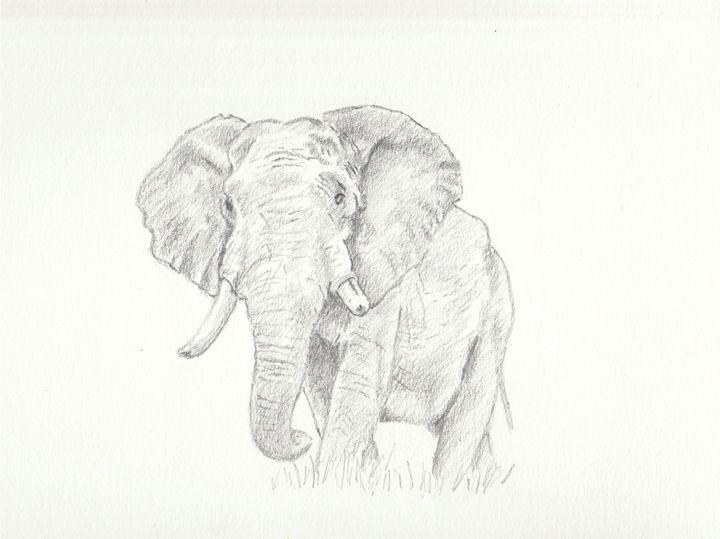 African Elephant - Ernie Westfall