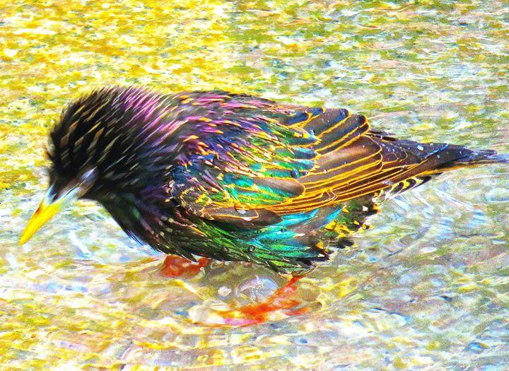 Starling 2a - Ken Lerner Fine Art Photography