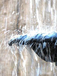 Fountain 140e - Ken Lerner Fine Art Photography
