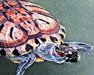 Turtle in Turtle Pond 1-1e - Ken Lerner Fine Art Photography