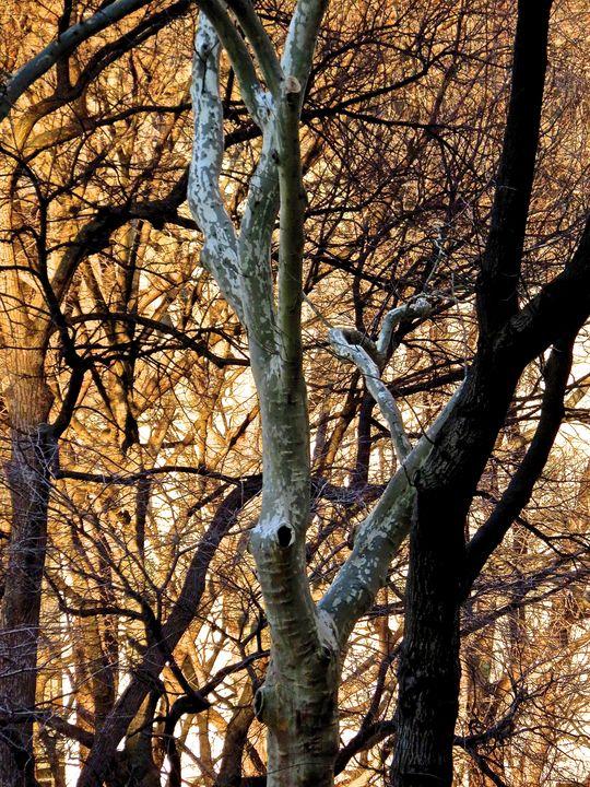 Branches 47 - Ken Lerner Fine Art Photography