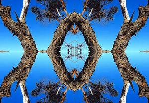 Arbor in the Sky