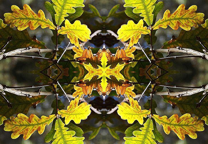 Glowing Oak Leaves - Sherrie Hall