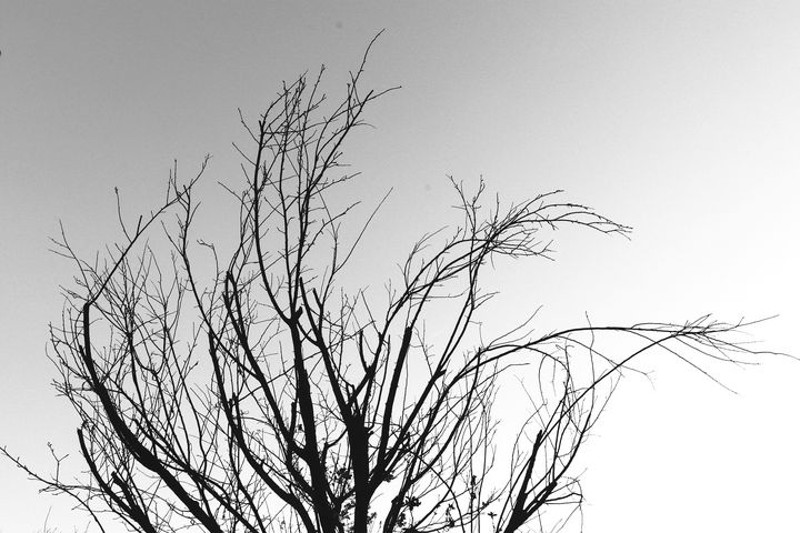 The Dancing Branches - RD Photography