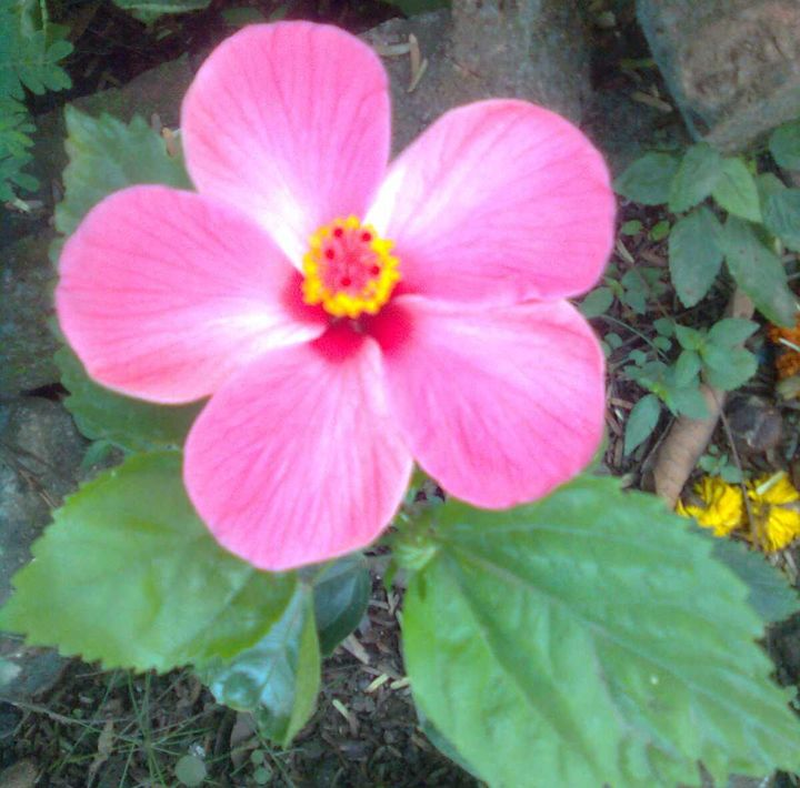 flower - Astonish Solution