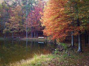 Silent Pond - Auterys Art