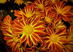 Bright Orange and Yellow Flowers