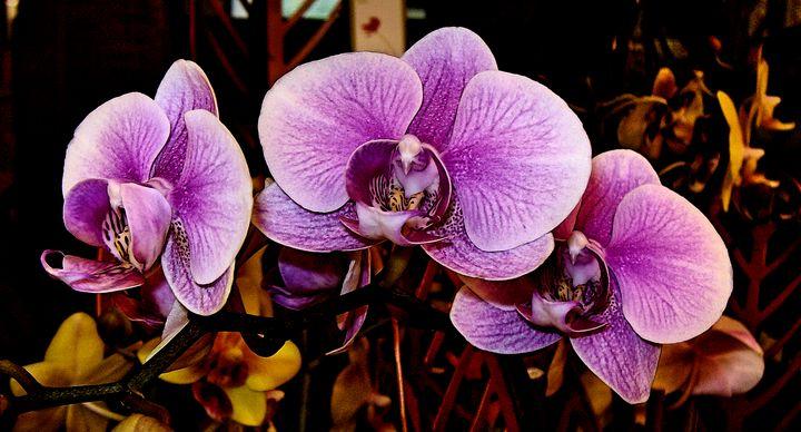 Pink Orchid Flowers - Auterys Art