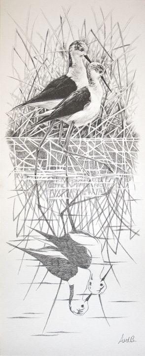 Black-winged Stilts - Anne van den Broek Art and Illustrations