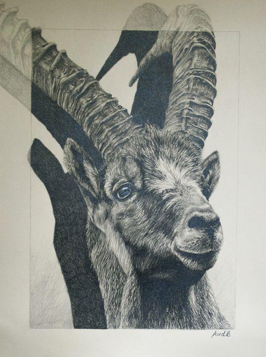 Ibex - Anne van den Broek Art and Illustrations