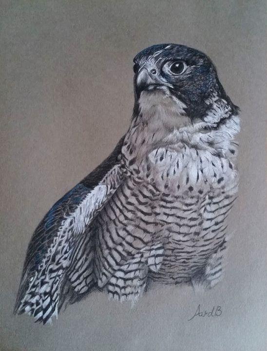 Peregrine falcon - Anne van den Broek Art and Illustrations