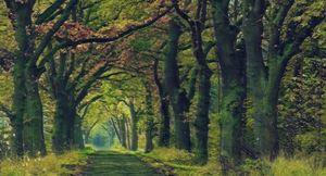 Row of trees avenue