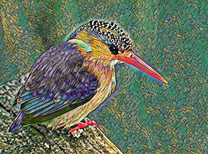 Kingfisher bird - Alex Chernov
