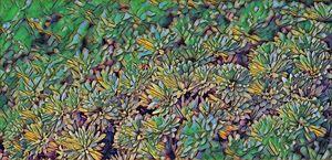 Chrysanthemums, Take 2