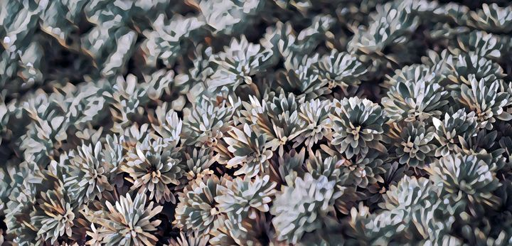 Chrysanthemums, Take 1 - Alex Chernov