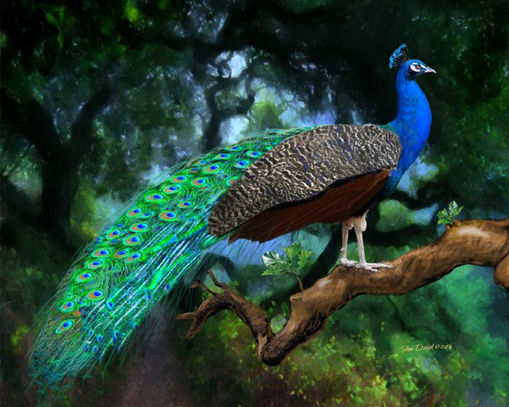Peacock - Artistic Visions