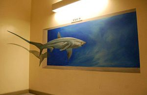 Shark (3D) on Wall