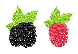black and red berries