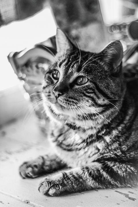 Cat in Bay Window - Shauni Mulder