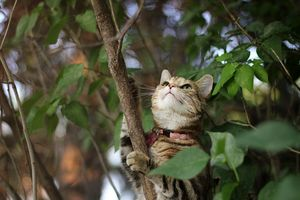 Tabby Cat in Lilac Bush