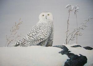 Owl by Len M. Rusin