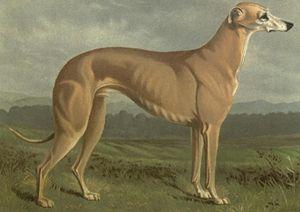 Greyhound (1914) - Rogers Art Shop