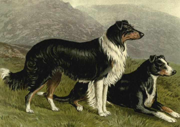 Old English Sheep Dogs (1881) - Rogers Art Shop