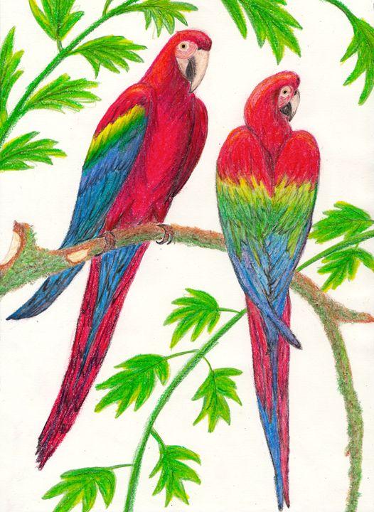 Parrots - Walanad