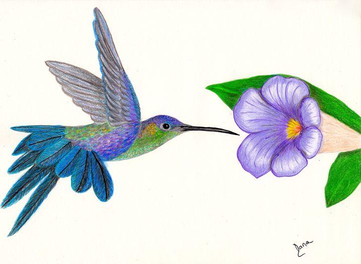 Hummingbird - Walanad