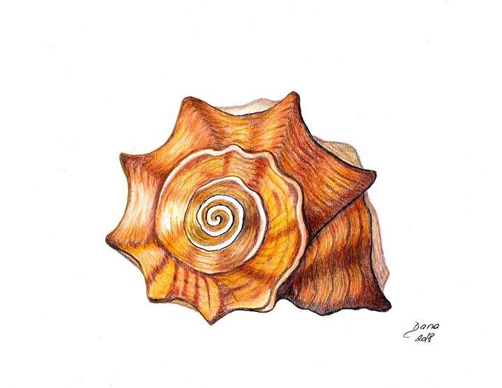 Sea snail shell - Walanad
