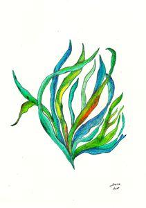Seaweed 4 - Walanad