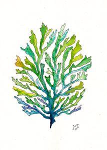 Seaweed 3 - Walanad