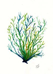 Seaweed 2 - Walanad