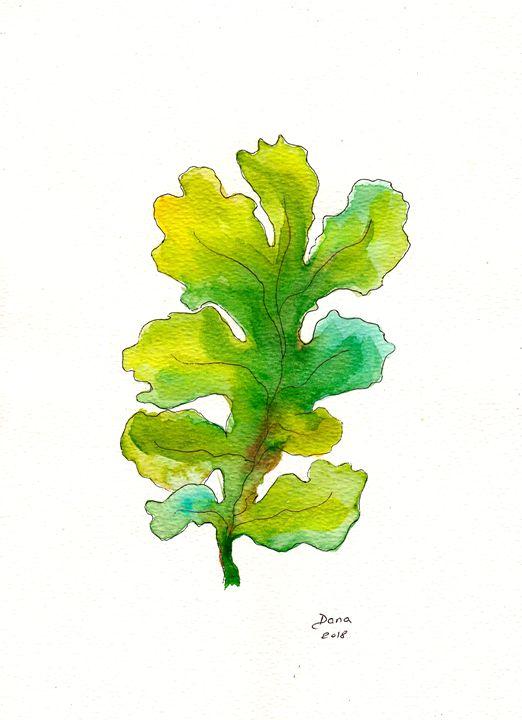 Seaweed - Walanad