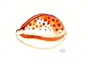 Kauri shell