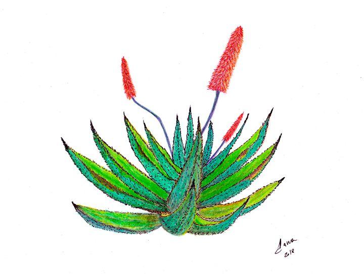Aloe - Walanad