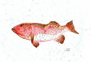 Coral Trout