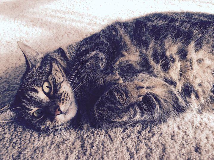 Sleepy Cat - James Orchard