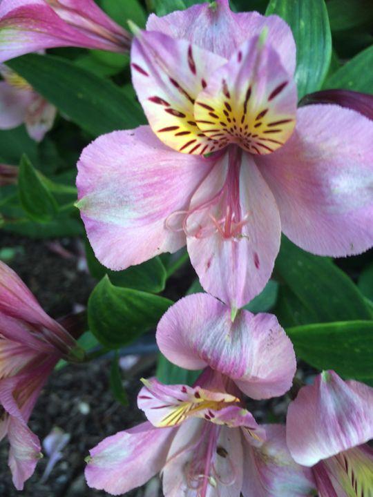 Beautiful Purple Flower - James Orchard