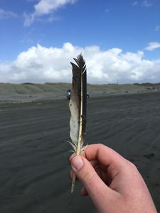 Feather From The Beach