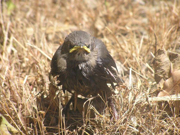 Grumpy Bird - James Orchard