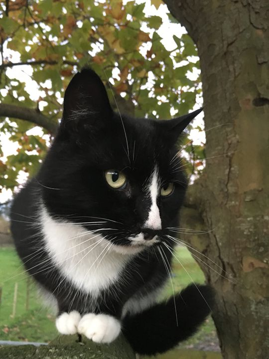 Cat By Tree - James Orchard