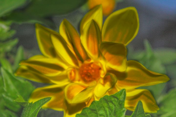 The Funky Flower - Artscapes Studio
