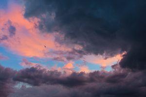A bird escaping the storm.